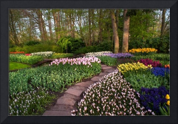 Pathway through Keukenhof Flowerbeds 1