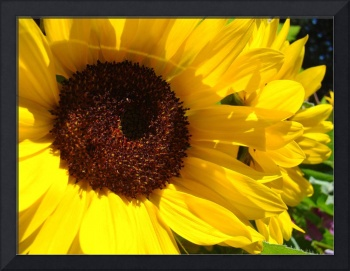 Glowing Yellow Sunflowers art prints Baslee