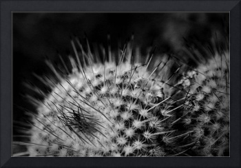 Spines and a Flower