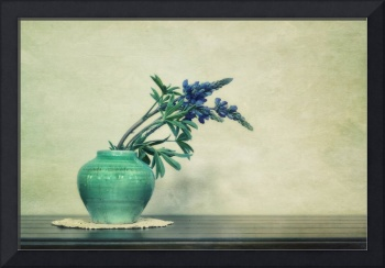 Still life with Yukon Lupines