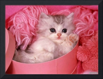 Cozy Pink Perfection Kitten