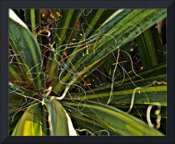 Yucca Plant Chaos
