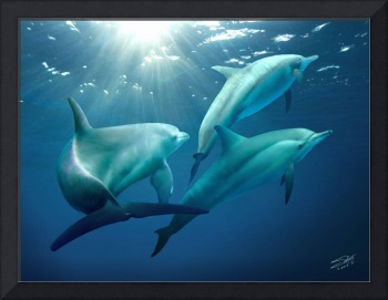 Three Dolphins of Tampa Bay