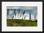 Cape Lookout by Mark Cullen
