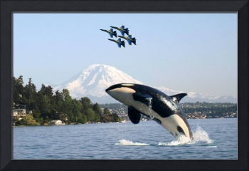 LOST ORCA WHALE IN LAKE WASHINGTON SEAFAIR BLUE AN