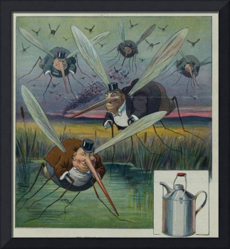 Vintage Illustration of Attacking Mosquitoes (1912