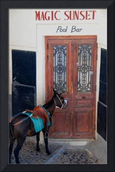 Donkey at the Door