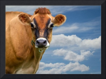 Dairy Cow Bessy
