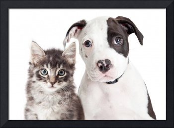Black and White Puppy and Kitten