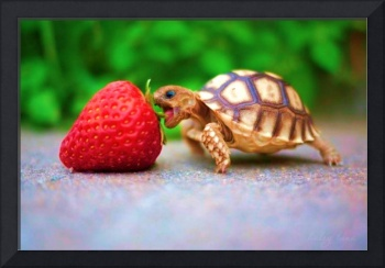 Tiny Turtle Goes For A Strawberry