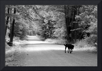 A Lonely Puppy Walk