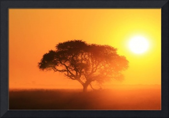 Tree of Life - Golden Sunset and Nature