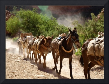 Last of the Pony Express