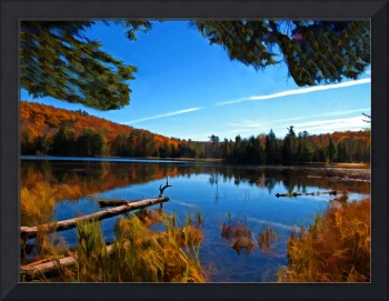 Magical Fall Marsh Land,Floating Tree Logs on Lake