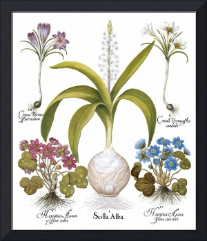 Besler Botanical Plate 010: Mixed Plants