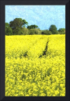 RapeSeedField watercolour