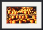 The Pumpkin Patch by Jacque Alameddine