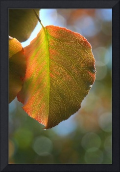 Autumn Leaf Bokeh