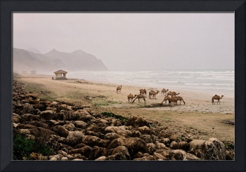 Beach Camels - Landscape Photography