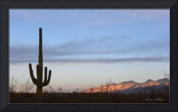 Saguaro Morning