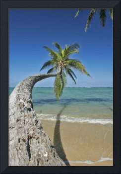 Hawaii, Oahu, Palm Trees Over The Ocean On A Clear
