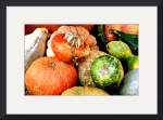 Pumpkins and Gourds by Jacque Alameddine