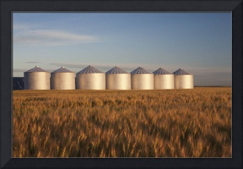 Row Of Shiny Metal Grain Bins In A Wheat Field At