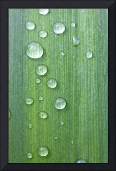 Drops Of Water On A Green Leaf Northumberland, En