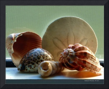 Sea Shells on a Window Sill