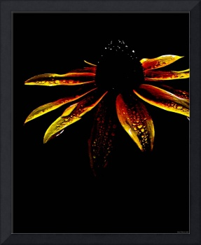 Painted Black Eyed Susan Abstract Wildflower