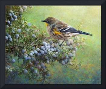 autumn juniper berries and yellow rumped warbler