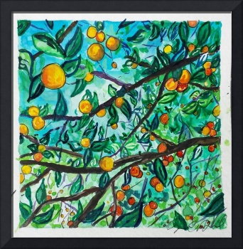 orange Grove Shade