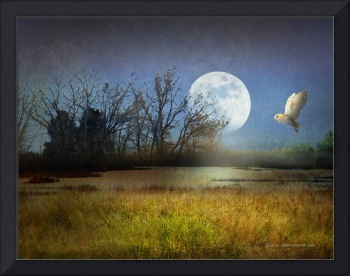 moon light barn owl