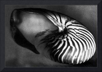 Solarized Seashell