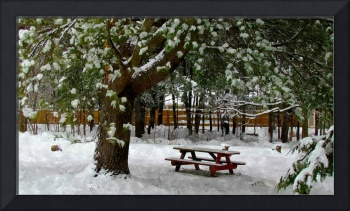 Park in winter with snow