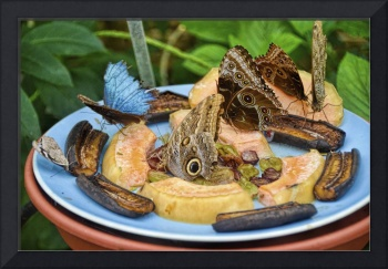 An Owl Butterfly Buffet