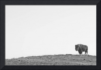 Bison On a Hill BW