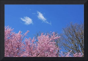 Spring Trees Art Prints Blue Sky White Clouds