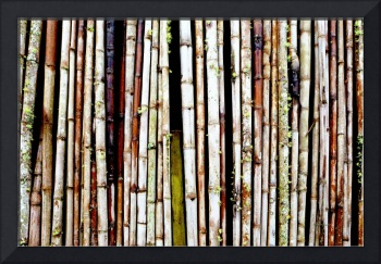 Abstract Nature Bamboo Shoots Photo 806