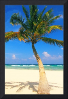 Palm Tree, Beach and Ocean, Playa Del Carmen