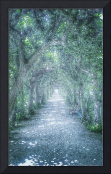 The Mysterious Tree Tunnel Alley