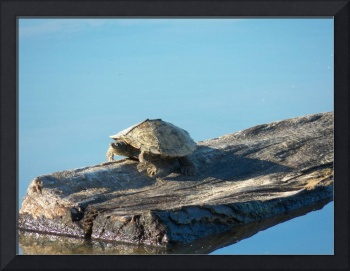 One Little Turtle Sittin' On a Log