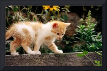 Trying Not To Fall Kitten