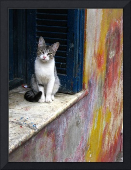 Cat and Colors