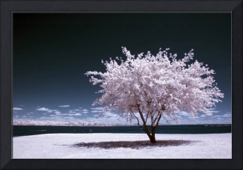 a winter summer - infrared tree landscape