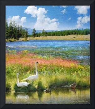 swans and summer flowers at the madison river
