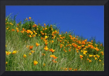 Poppies Flowers Meadow Photography Art Prints