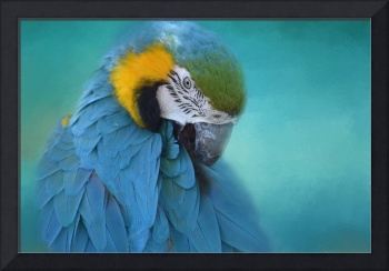 Portrait of a Preening Parrot