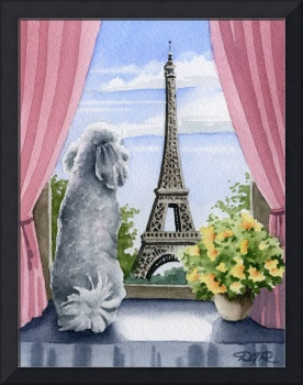 White Poodle in Paris
