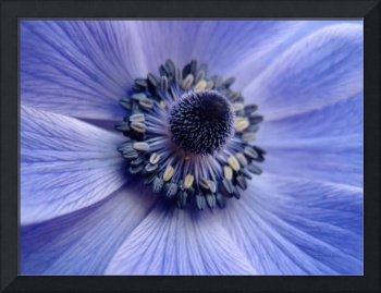 Expressive Blue and Purple Floral Macro Photo 706